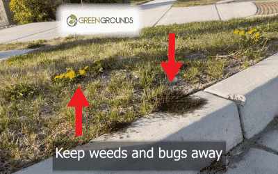 Oh No! Bugs and Weeds are here